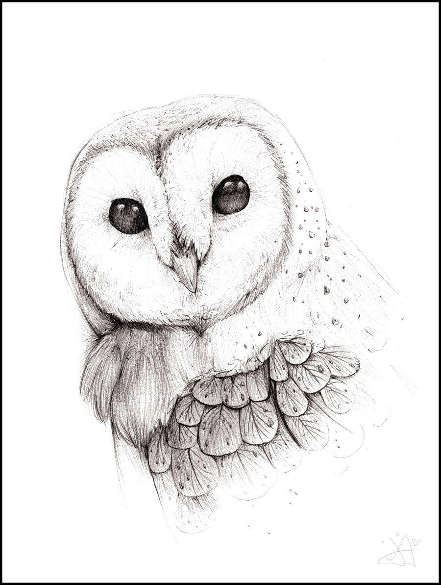 Barn owl by the on deviantart for Cartoon owl sketch
