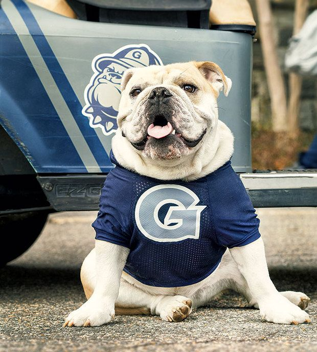 The Making Of A Mascot Georgetown S Jj The Bulldog Video Old