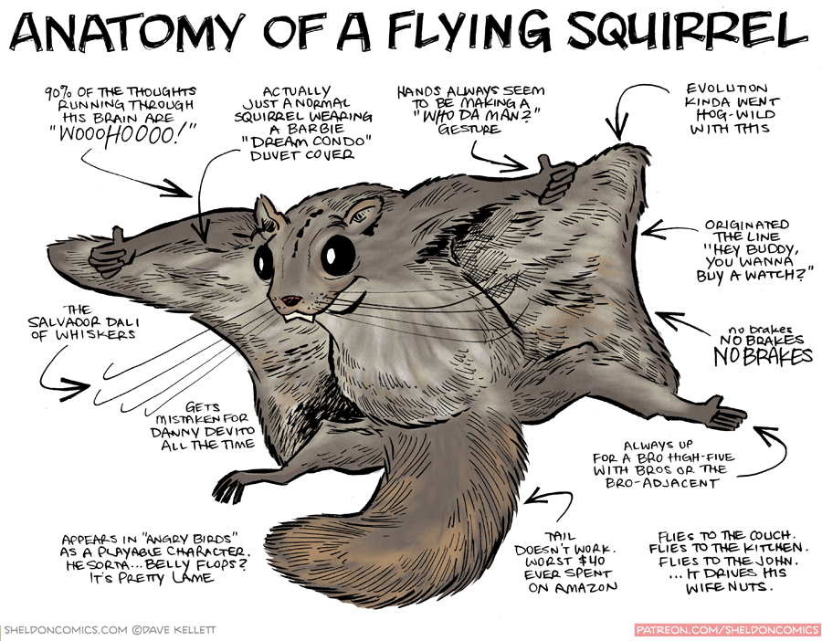 Strip For June 25 2015 Anatomy Of A Flying Squirrel Dah