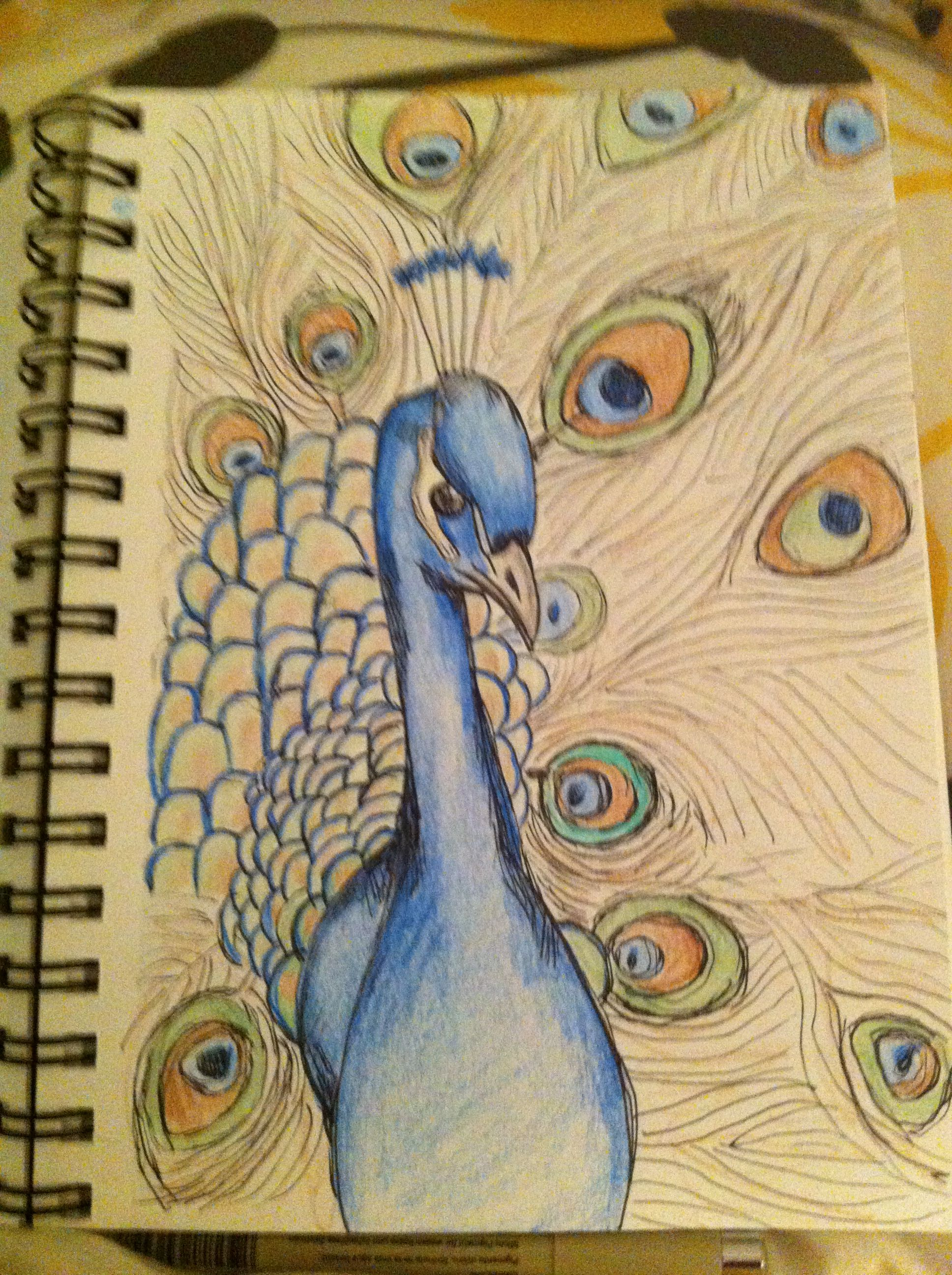 Peacock drawing from my art journal art journal peacock drawing