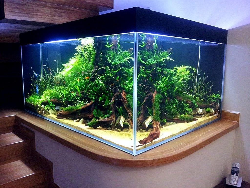 Akwarium W Ksztalcie L Dzien 49 Nature Aquarium Aquarium Fish Tank Aquarium Fish