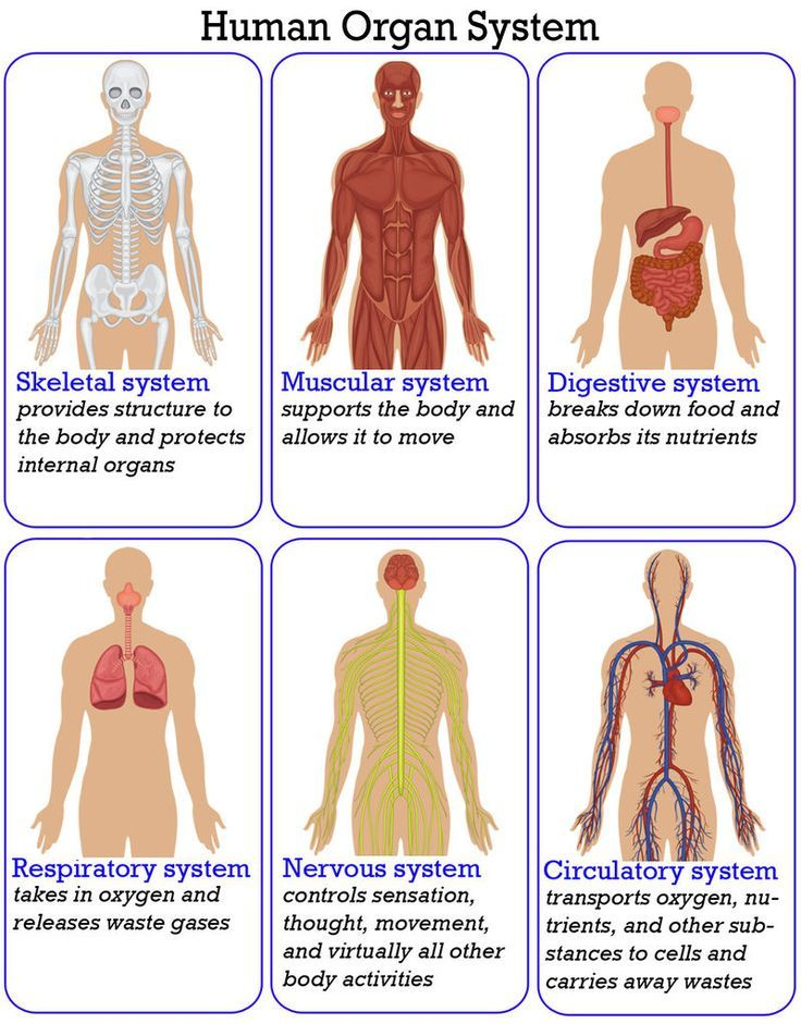 An Overview Of The Organ Systems That Make Up The Human Body Unit