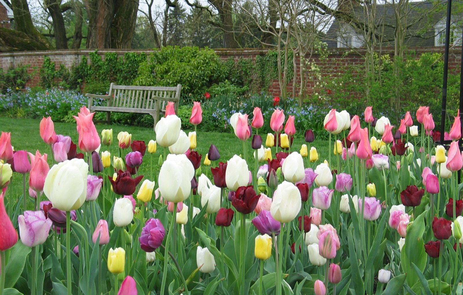 """""""Planting Spring Bulbs"""" info on plantchat Gardening Tips"""