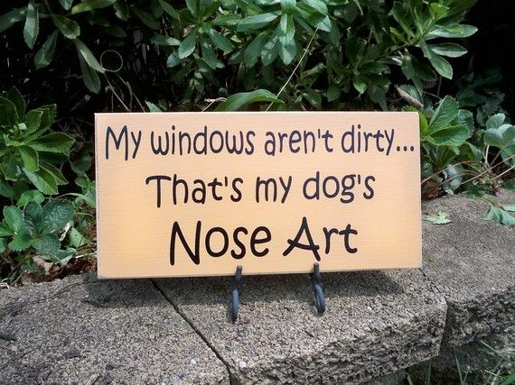 Sign Funny Sign Dog Sign My Dog's Nose Art by SimplySaidSayings