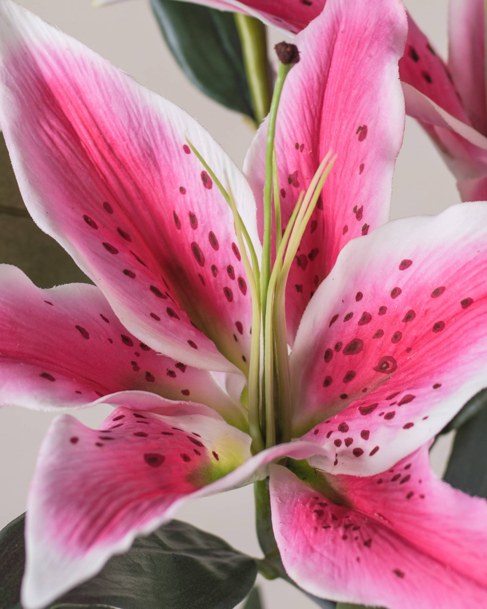 Casablanca Lily Google Search Pink Lily Flower Lily Flower Artificial Flowers