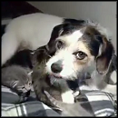 5 Abandoned Kittens Get an Unlikely New Mother - So Cute - Animals Video
