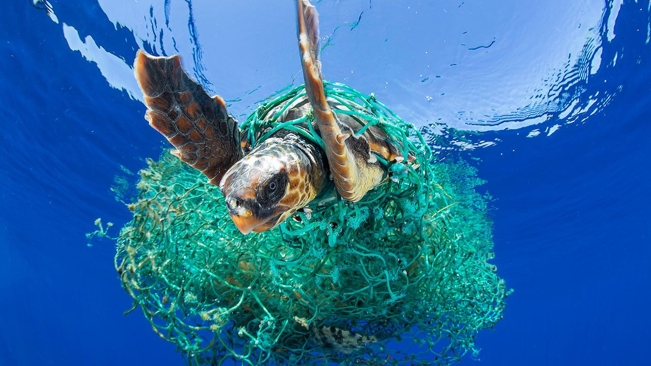 The Great Pacific Garbage Patch Great Pacific Garbage Patch Ocean Cleanup Sea Birds