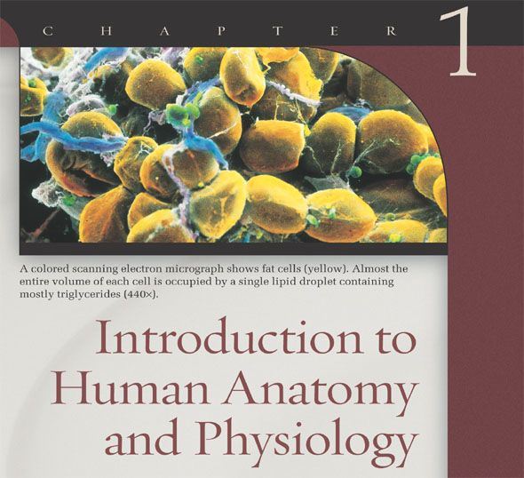 LOVE THIS!!!! Introduction to Human Anatomy and Physiology ...