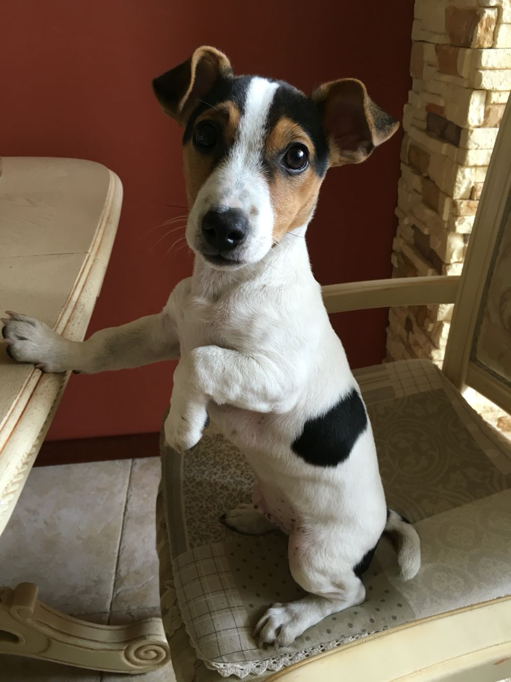 """Smoke"" the JRT. What a cutie. ❤️"