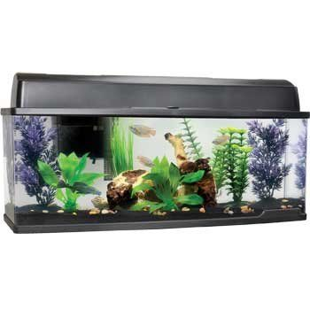 Petco Bookshelf Freshwater Fish Aquarium Amazon Pet Supplies 6 6 Gal Many Good Reviews Freshwater Aquarium Aquarium Fish Aquarium