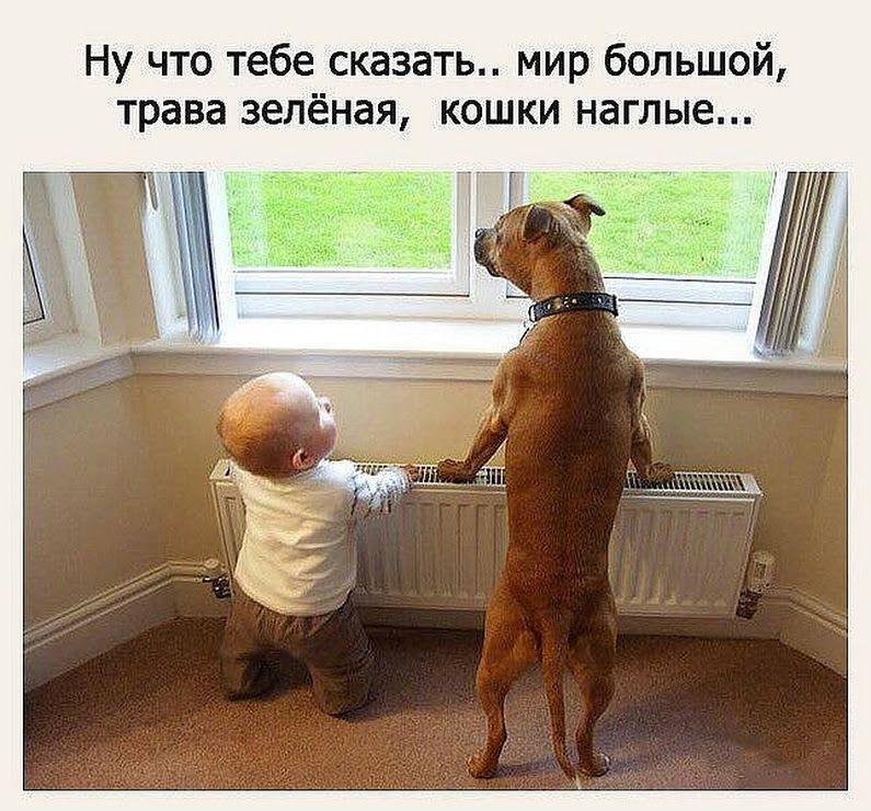 Фотография   Cute big dogs, Big dogs, Funny dogs