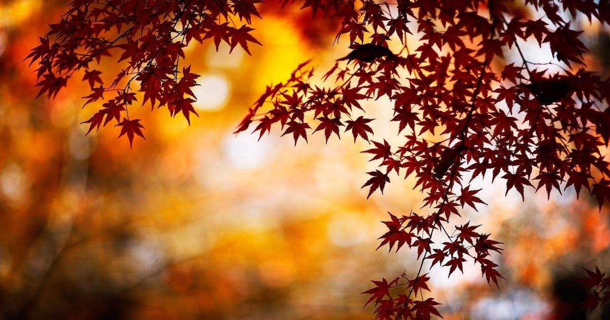 14 Hd Autumn Wallpapers Leaves Autumn Wallpapers Hd Autumn Leaves Wallpaper Fall T2973mw 1920x10 In 2020 Desktop Wallpaper Fall Fall Wallpaper Autumn Leaves Wallpaper