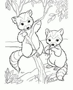 Image Result For Woodland Creature Coloring Pages