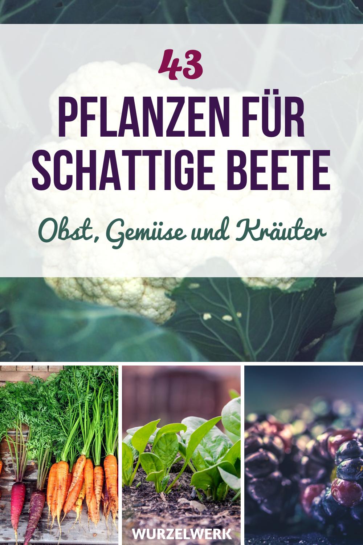 43 Kräuter, Obst- und Gemüsepflanzen, die auch im Schatten wachsen #beetanlegen