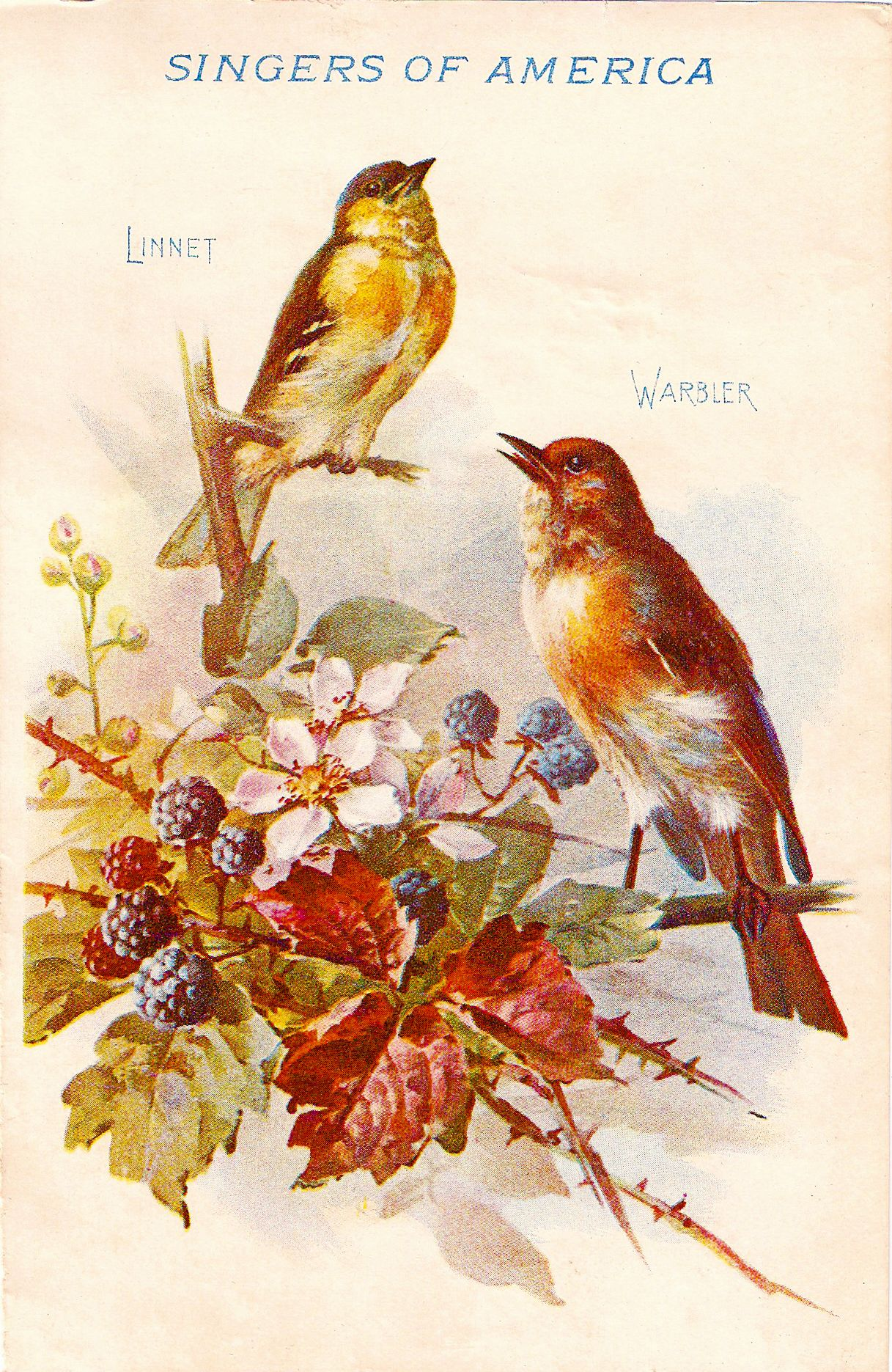 Free Vintage Clip Art - Blackberry Birds for Autumn ...