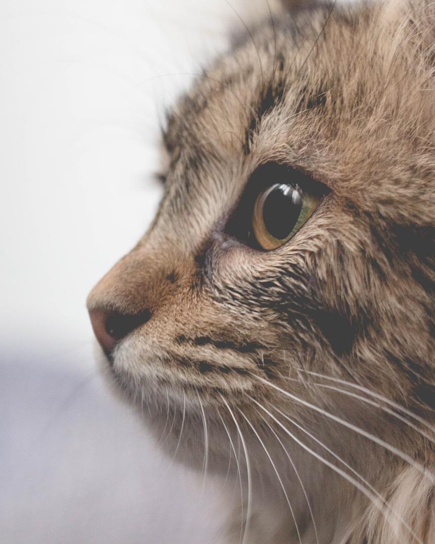 Photo of Comida 100% natural y saludable para gatos