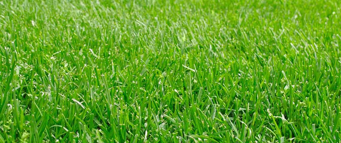 How Often Do You Need to Fertilize Your Lawn Bermuda