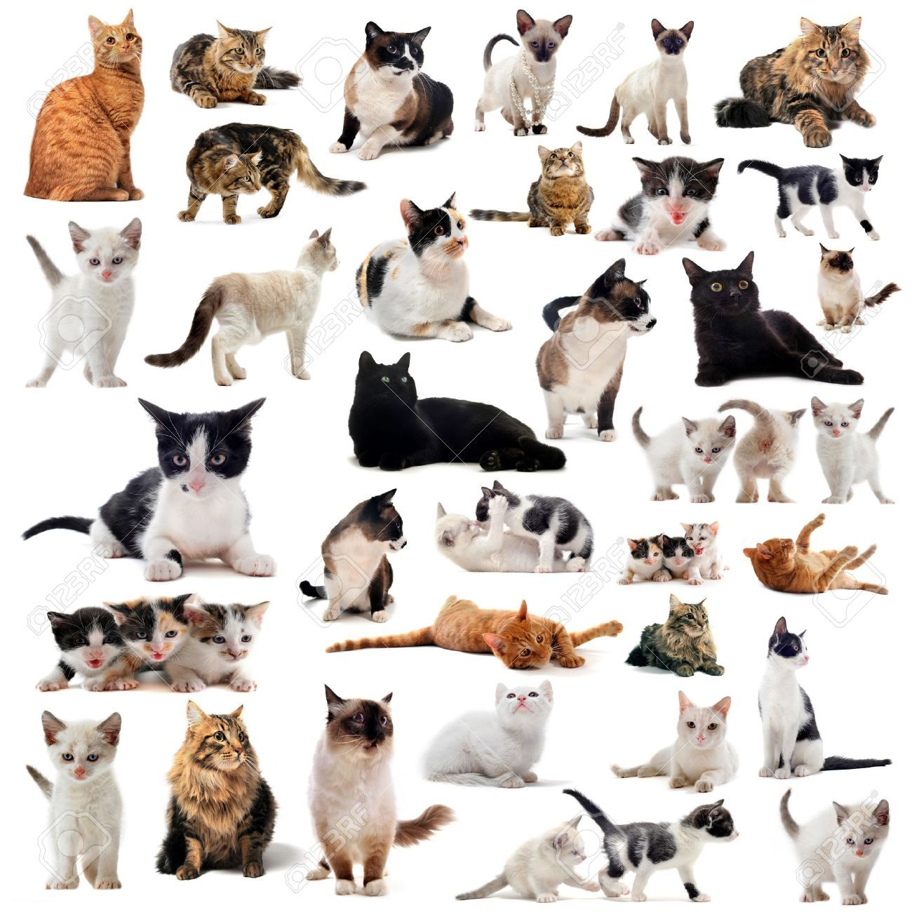 Cats And Kitten On A White Background Grey Cat Breeds Cats And