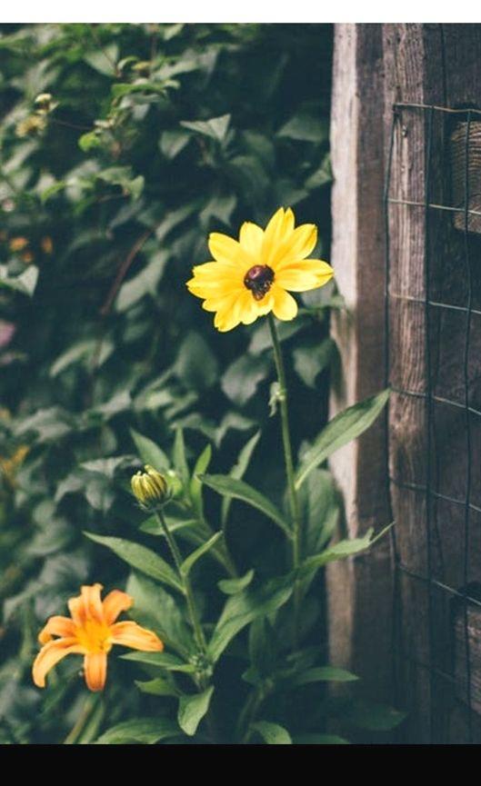 gardening awakening pinterest #gardening hacks for a greener, farm ...