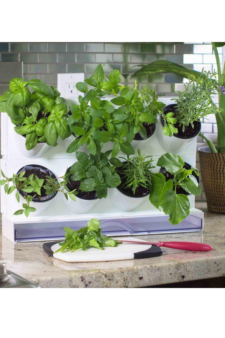 Herbs that love summer | Summer plants, Indoor plants, Plants