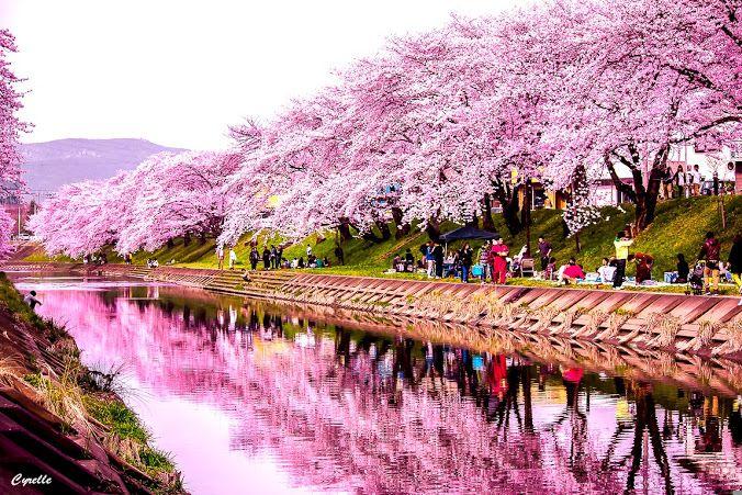 Hanami Japan Japanese Garden Plants Flowering Trees Hanami