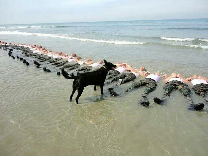 Navy Seal's training...