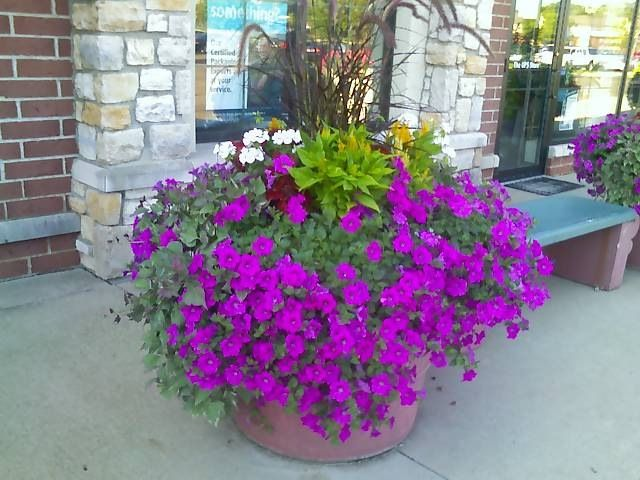 One Of The Flower Pots That I Have Done Wave Petunia Celosia