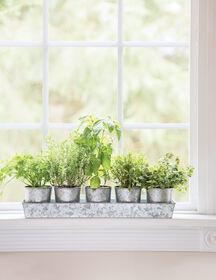 Galvanized Windowsill Herb Planters + Tray | Gardeners.com