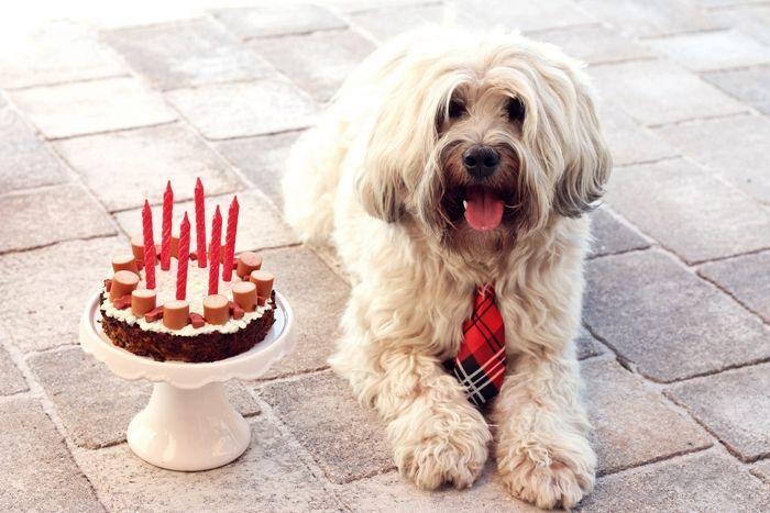 Hackfleisch Wurstchen Torte Fur Den Hunde Geburtstag Hunde Hundebellen Hundezuradoption Hundearten Hund Geburtstag Hund Geburtstagskuchen Kuchen Fur Hunde
