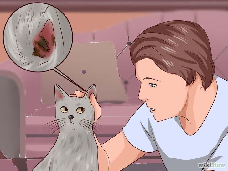 Get rid of ear mites in a cat cat ear mites cats cat steps