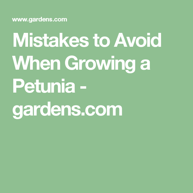 Mistakes to Avoid When Growing a Petunia - gardens.com