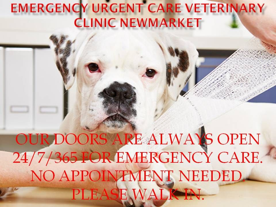 Veterinary Emergency Clinic Of Ontario Is The Best Place To Treat Your Pets Just Go To The Veterinary Emerg Emergency Vet Clinic Emergency Vet Pet Clinic