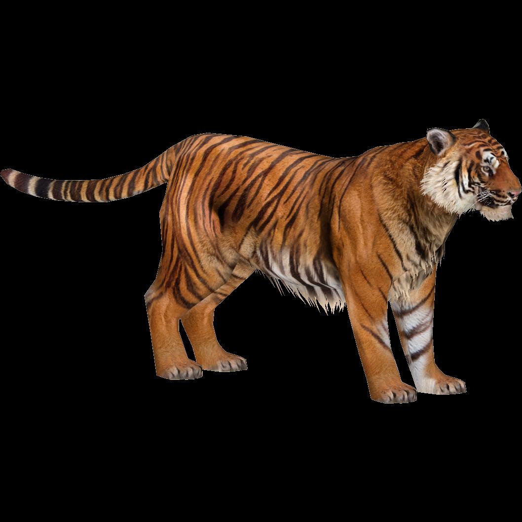Tiger Images Cartoon