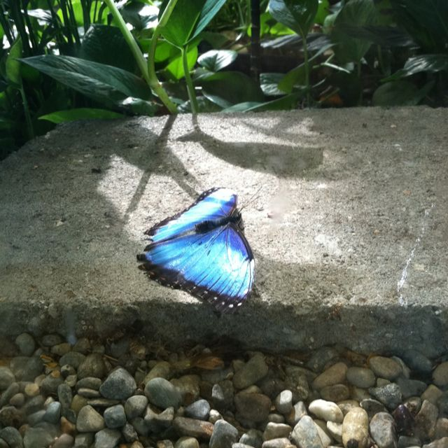 Butterfly garden at Pacific Science Center, Seattle, WA