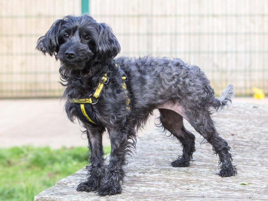 Looking at Rainbow dogstrust rehomeadog Dog adoption