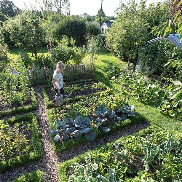 Back Yard Potager: Pin By Vegetable Garden On Vegetable Garden