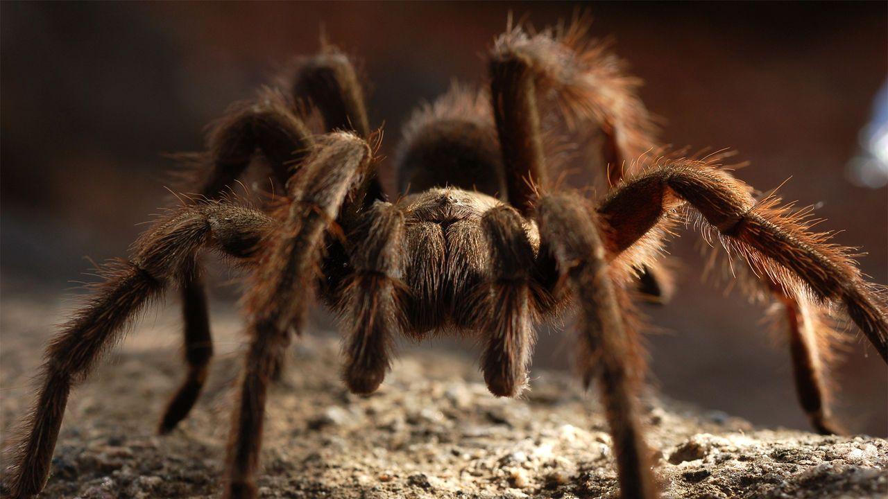 72 Dangerous Animals Australia Deadly animals