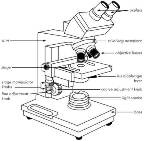 Brightfield microscope labeled diagram of car wiring diagrams parts of the brightfield microscope independent operative pinterest rh pinterest com light microscope diagram brightfield label ccuart Images