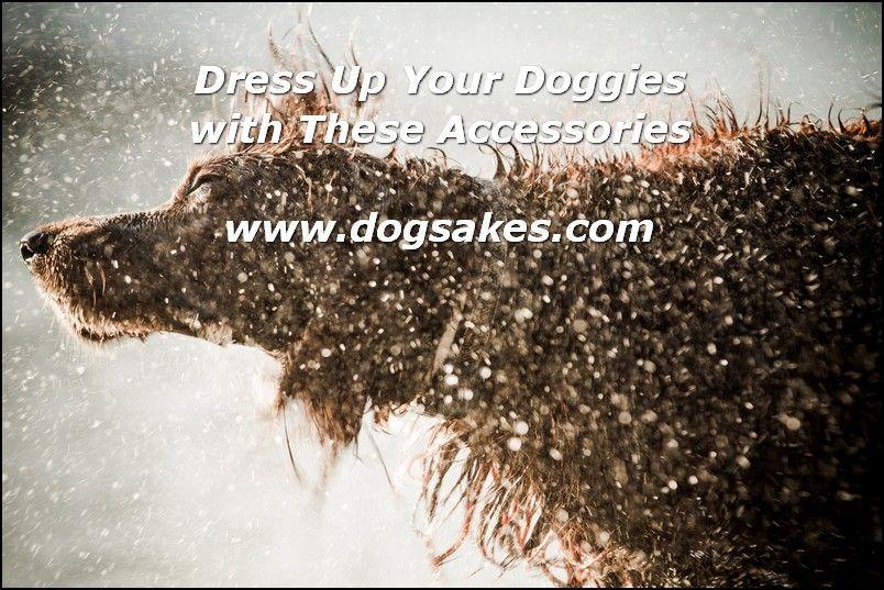 Info's : Dog Depression Is Real - Dog Sakes