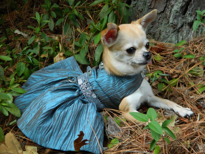 Blue Ice Elegant Fancy Dog Dress Chihuahua Dog By Rufflerunway