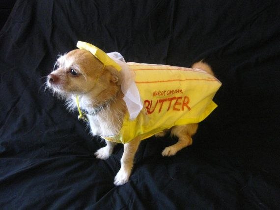 Butter Dog Holiday Dog Thanksgiving Puppy Clothes