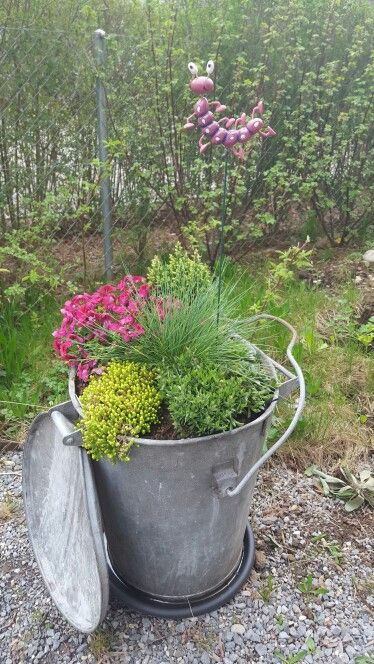 Old Garbage Bin For My Flowers