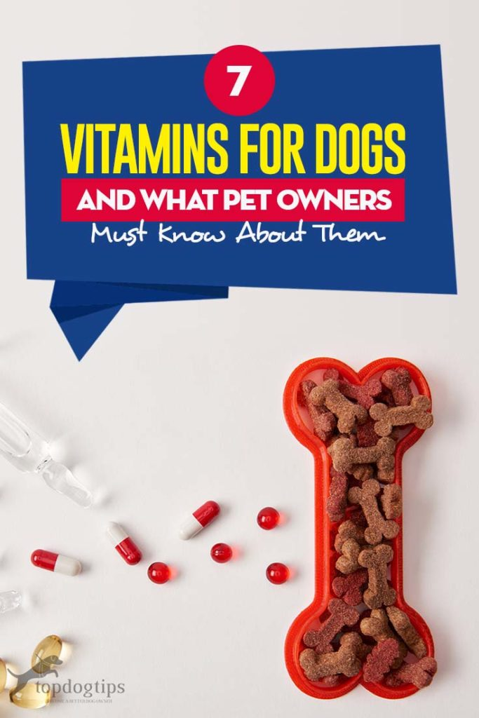 7 Vitamins That All Dog Owners Need To Know About In 2020 Dog Vitamins Vitamins Dog Supplements