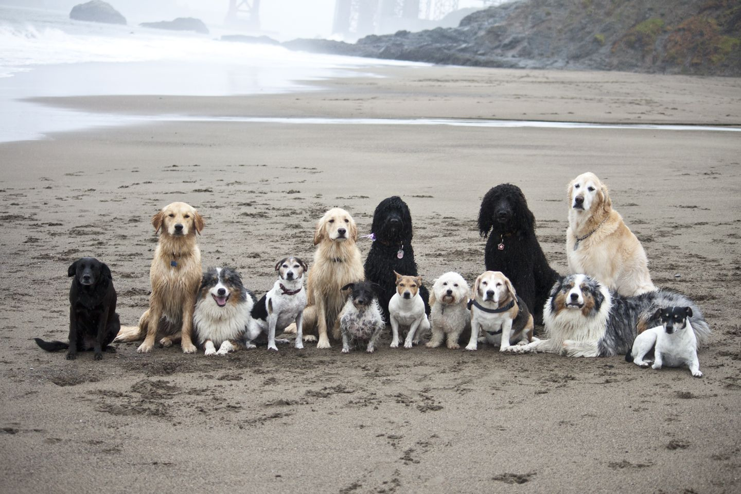 """One of our Pack Walks at Baker Beach Posing for a pic """"Come LIKE US on Facebook at """"The Love of Dogs""""  and see our daily pics to put a smile on your face and joy in your heart."""