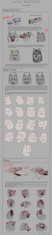 Pin by Poky105 on Art stuff | Pinterest | Anatomy, Wolf and deviantART