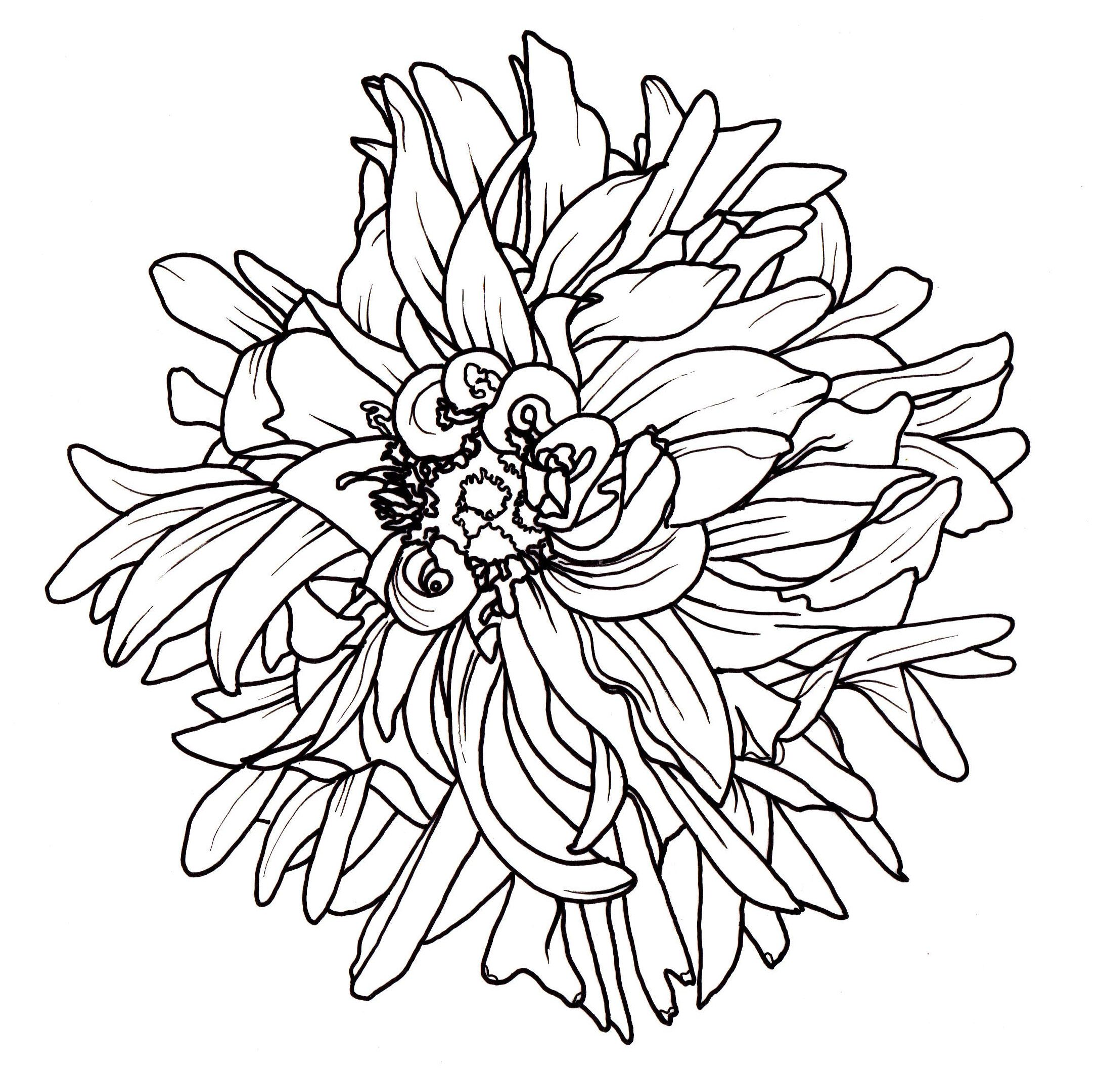 Line Drawing Flower Pattern : Line drawing flowers dahlia drawings pinterest