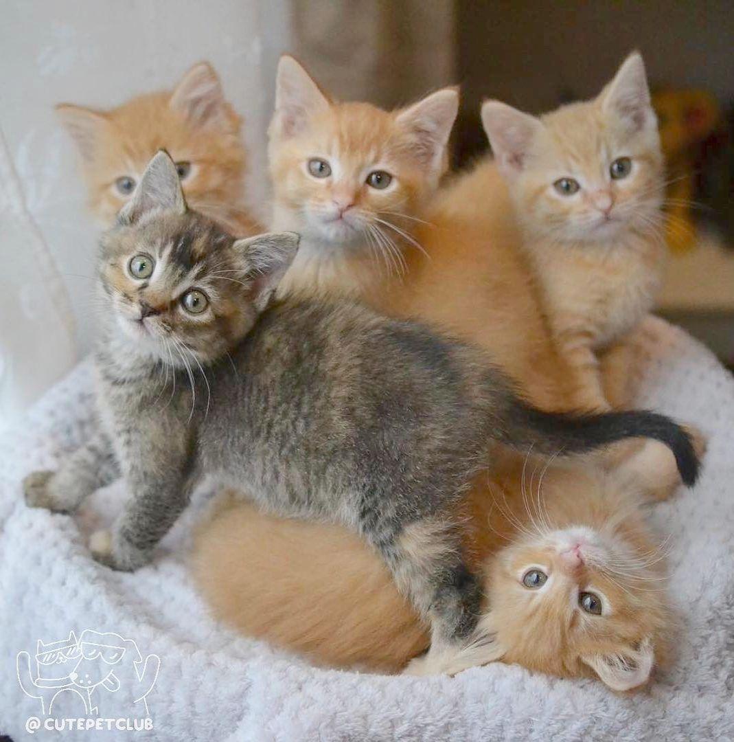 Kittens Oc Craigslist Kittens Cute Kittens Cutest Cute Baby Cats Kittens Cutest Baby