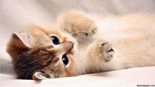 Mimi Chaton Chaton Chaton Rigolo Cute Kittens Et Fond D
