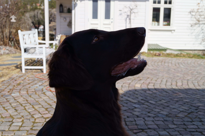 Ola, my dog.