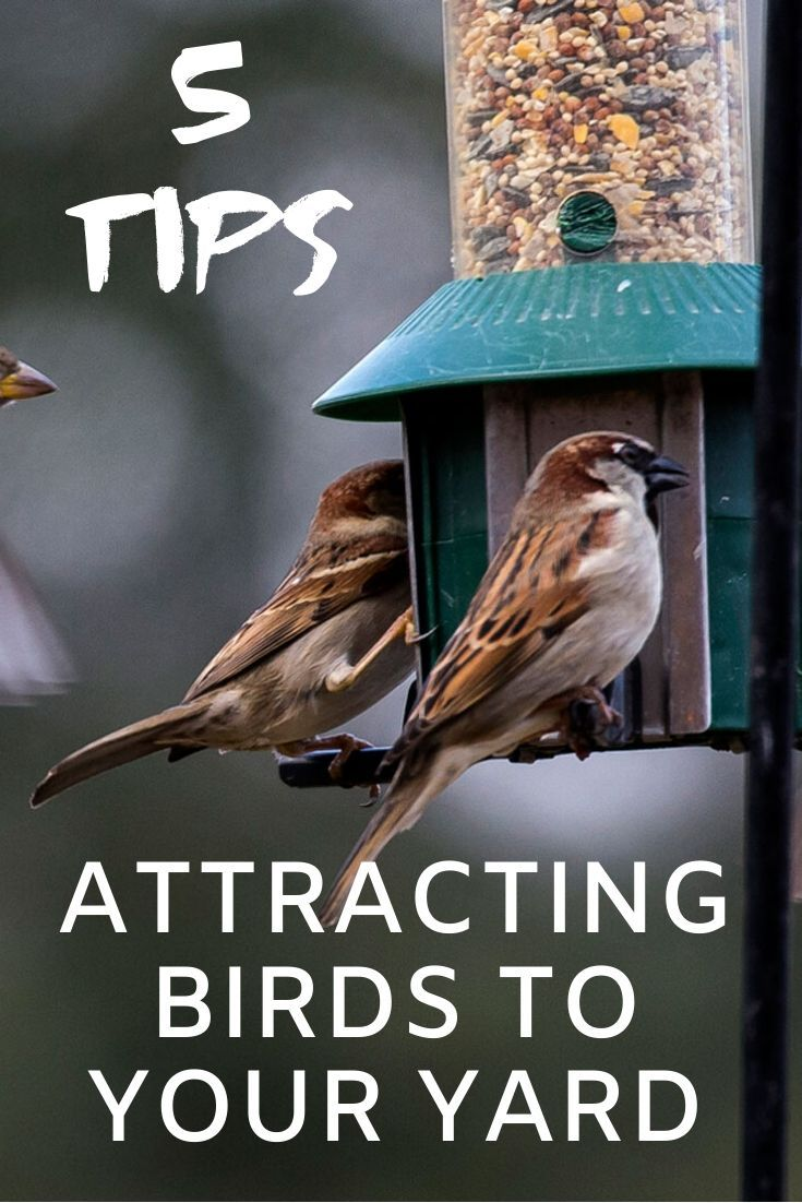 Birds In The Garden - 5 Tips For Attracting Birds To Your ...